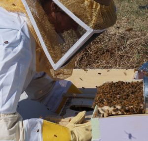 Cover photo for Beginner Bee Keeper Grant Program