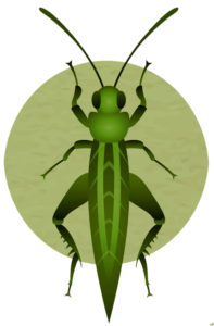 graphic of green insect