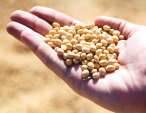 Image of seeds in hand