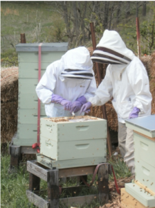 Cover photo for Beekeeping Short Course