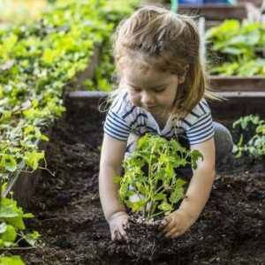 Cover photo for 4-H Virtual Summer Gardening Project
