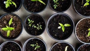 Cover photo for No Seeds, No Problem