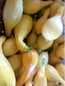Cover photo for Cooking Up the Season - Summer Squash