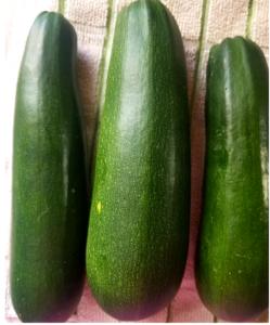 zucchini snip
