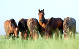 Cover photo for Pasture Management for Horse Owners Webinar Series