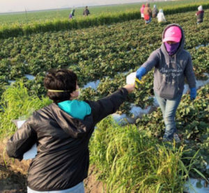 Cover photo for Extension Assisting State With Farmworker Personal Protection