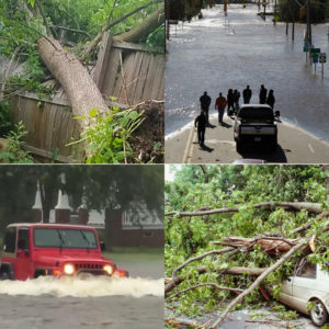 Cover photo for NC State Extension Disaster Information Center
