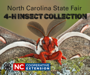 Cover photo for 4-H Entomology - Insect Collection